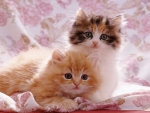 Cutey one and two