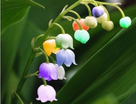 Pastel Lily Of The Valley - Flower, Green, Nature, Orange, Lily, White, Blue, Purple