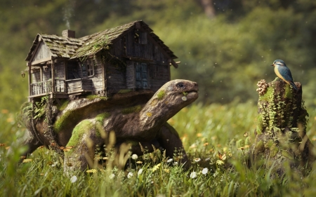 giant turtle house - giant, grass, turtle, house, bird, flower