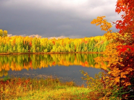 Autumn Lake Forest - flowers, forest, autumn, leaves, splendor, trees, reflection, lake, nature