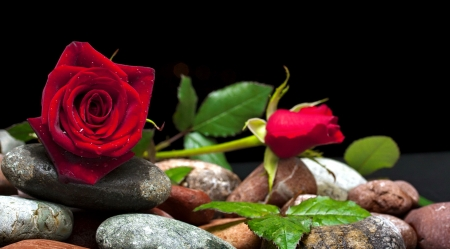 Roses and stones - lovely, flowers, pretty, stones, leaves, petals, red, fragrance, beautiful, roses, scent