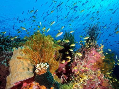 Sealife & Ocean Coral Reef - Sea, Fish, Nature, Oceans, Coral Reefs