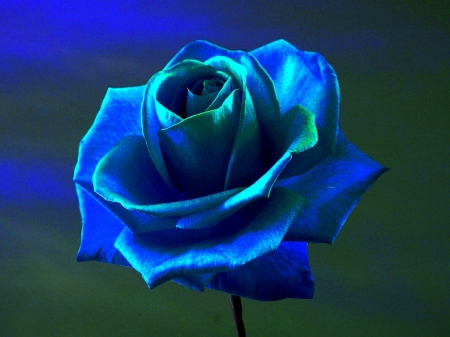 3d blue rose - Flowers & Nature Background Wallpapers on Desktop Nexus (Image 2282220)