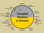 Circadian rhythms in humans