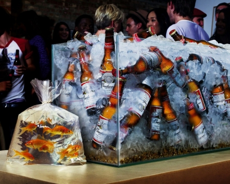 :D - fish, aquarium, bag, situation, water, summer, funny, bottles, beer