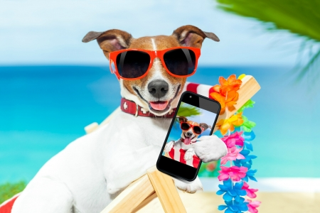 Selfie - paw, caine, selfie, animal, sea, sunglasses, boat, jack russell terrier, summer, phone, funny, dog, blue