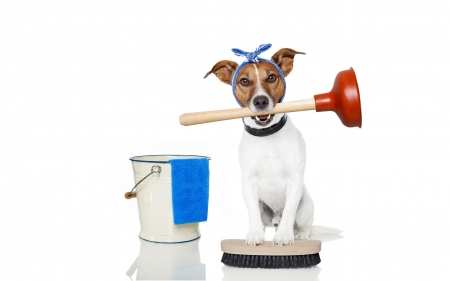 Cleaning day - clean, caine, bucket, situation, animal, jack russell terrier, day, funny, white, dog, blue
