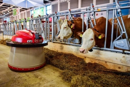Robots at work - Berlin, Working, Robot, Automated farm exhibit, 19 Jan  2017, Dairy cows