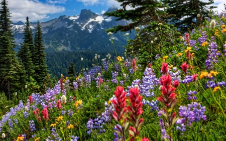 Mountain flowers - image, rock, yellow, mountain, nice, splendor, flowers, trees, pines, winter, cool, snow, purple, awesome, violet, white, landscape, field, red, ed, panoramic view, beautiful, cold, picture, photography, green, photo, amazing, view, colors, spring, leaf, nature, natural