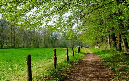 Green tunnel in the field - image, grass, nice, splendor, path, tunnel, trees, cool, awesome, wire, field, fence, panoramic view, beautiful, trunks, picture, farm, photography, green, trail, fields, road, mage, photo, amazing, view, line, plantation, colors, leaf, plants, nature, natural