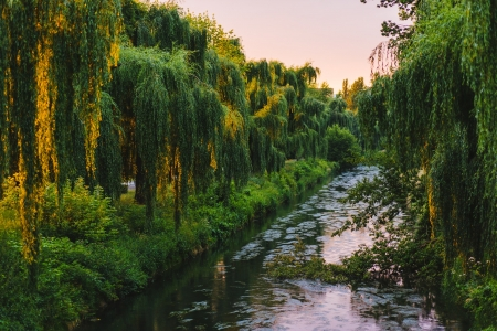 Forest and River Flowing During Daytime - forest, green, flowing, nature, river, trees, daytime, wood