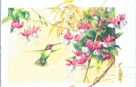 Hummingbird - bird, painting, flowers, blossoms, artwork, fuchsia