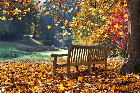 A good autumn to contemplate - image, grass, orange, foliage, nice, splendor, scenario, e, forests, wood, trees, panorama, cool, awesome, garden, trunk, red, scenic, autumn, panoramic view, beautiful, picture, photography, green, scenery, beije, photo, amazing, view, bench, leaf, plants, nature, scene