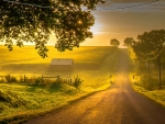Sunlit Country Road