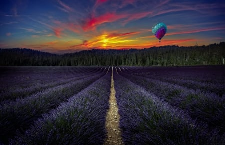 Sunset on the lavander - forest, balloon, flowers, lavender, trees, field, Sunset, landscape