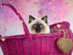 Kitty in pink basket