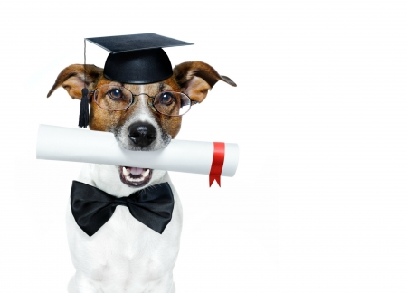 Happy Graduation! - caine, black, bow, animal, hat, school, jack russell terrier, funny, white, graduation, dog