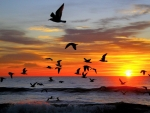 Seagulls over Ocean at Sunset