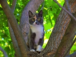 Kitten on tree