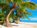 Sandy beach and palm trees on Seychelles