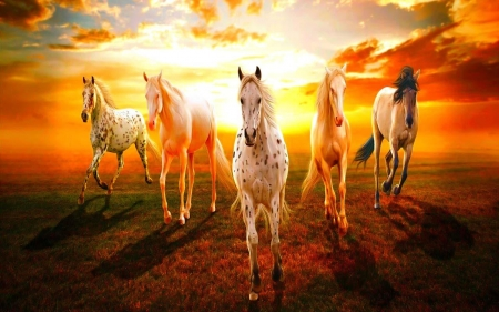 horses - beauty, five, hd, horses