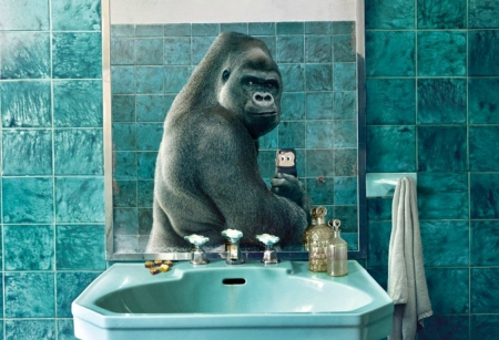 Selphie - monhey, creative, situation, fantasy, phone, gorilla, funny, mirror, white, blue