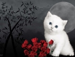 White Kitty and Roses