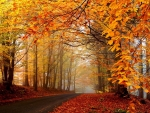 Magnificent autumn