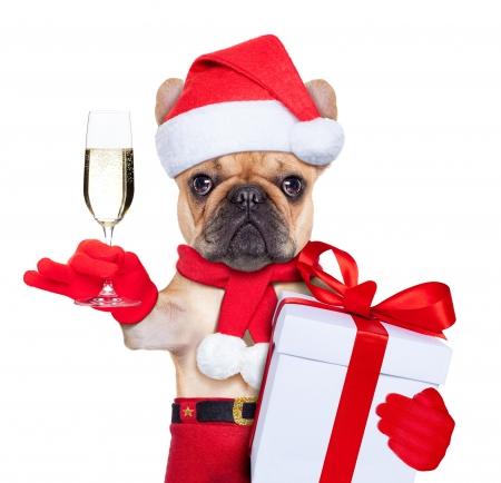 card hat christmas glass dog animal