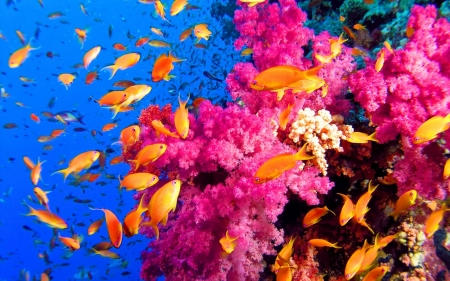 Colorful Coralreef - Sea, Ecosystems, Coral Reefs, Oceans, Colorful, Nature