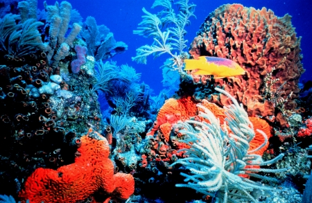 Bright Colorful Coral Reef - Sea, Fish, Ecosystems, Nature, Oceans, Coral Reefs