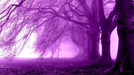 Purple morning in the forest - image, foggy, grass, 1920x1080, renderized, foliage, fog, picture, photography, nice, splendor, morning, purple world, smoke, pink, photo, forest, widescreen, view, colors, trees, silhouette, leaf, cool, purple, nature, white, branches