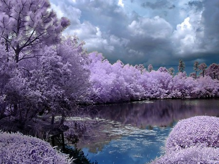 color nature - forest, photography, purple, color, trees, clouds, sky, lake