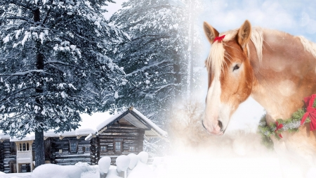 winter christmas horse - Horse Christmas