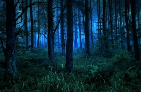 Foggy Forest Night Forests Nature Background Wallpapers