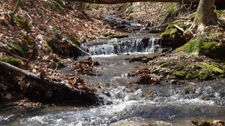 Forest Stream in Spring - Spring, Stream, Forest, Nature