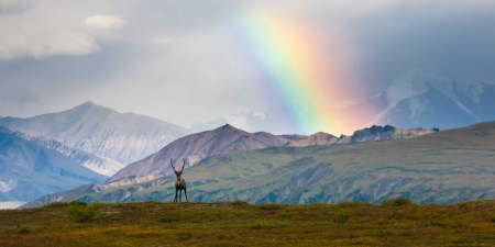 Rainbow over Denali National Park - Mountains, Sky, Alaska, Deer, Landscapes, National Parks, Rainbows, Nature