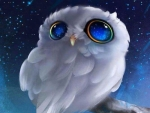 Little White Owl