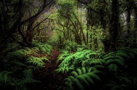 Path In Fern Forest Jungle Forests Nature Background