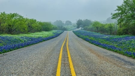 Roadside Bluebonnets in Texas Hill Country