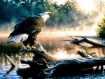Scouting the River - Eagle