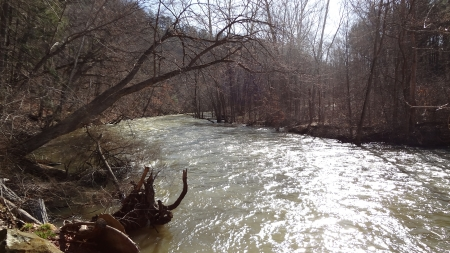 Shiny Mohican River in Spring - Spring, Forest, River, Nature