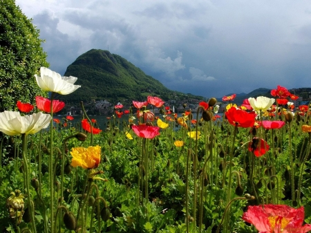 Lovely Poppy Field by the Lake - sky, poppy, flowers, field, nature, lake