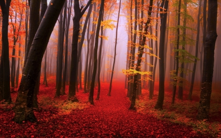 Red Misty Autumn Forest - Trees, Mist, Nature, Fog, Autumn, Fall, Forests