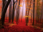 Red Misty Autumn Forest