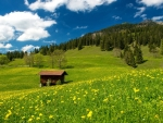 Pasture in the Bavarian Alps,Germany