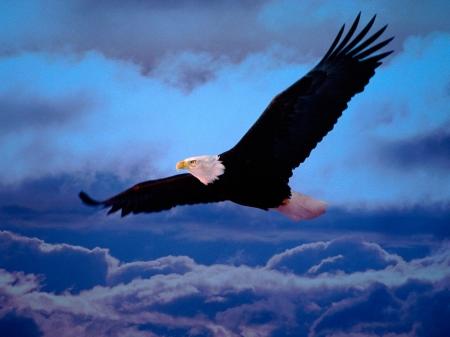 Flying eagle birds animals background wallpapers on desktop flying eagle altavistaventures Gallery