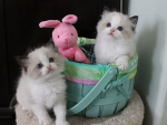 cute kittens with a bunny toy