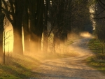 Sunrays through Forest Trees and Dirt Road