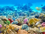 Colorful Sea Corals and fish